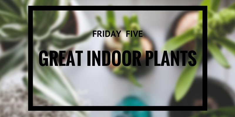 Friday Five: Great Indoor Plants - InconnuLAB
